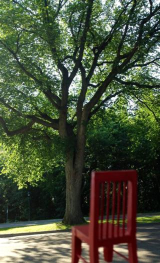 Un arbre à soi